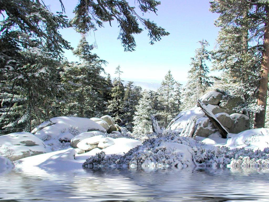 заснеженный лес intuiyiua.ru